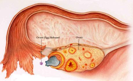 Clomid per gravidanza gemellare