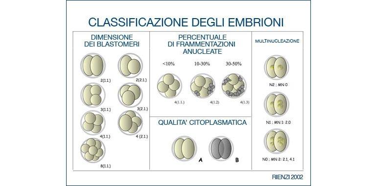 classificazione embrioni