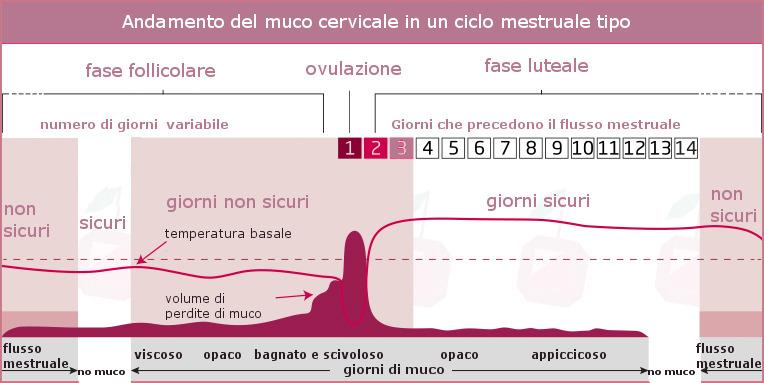 Calendario Mestruale Giorni Fertili.Evitare Lo Gravidanza Con Il Metodo Del Muco Cervicale