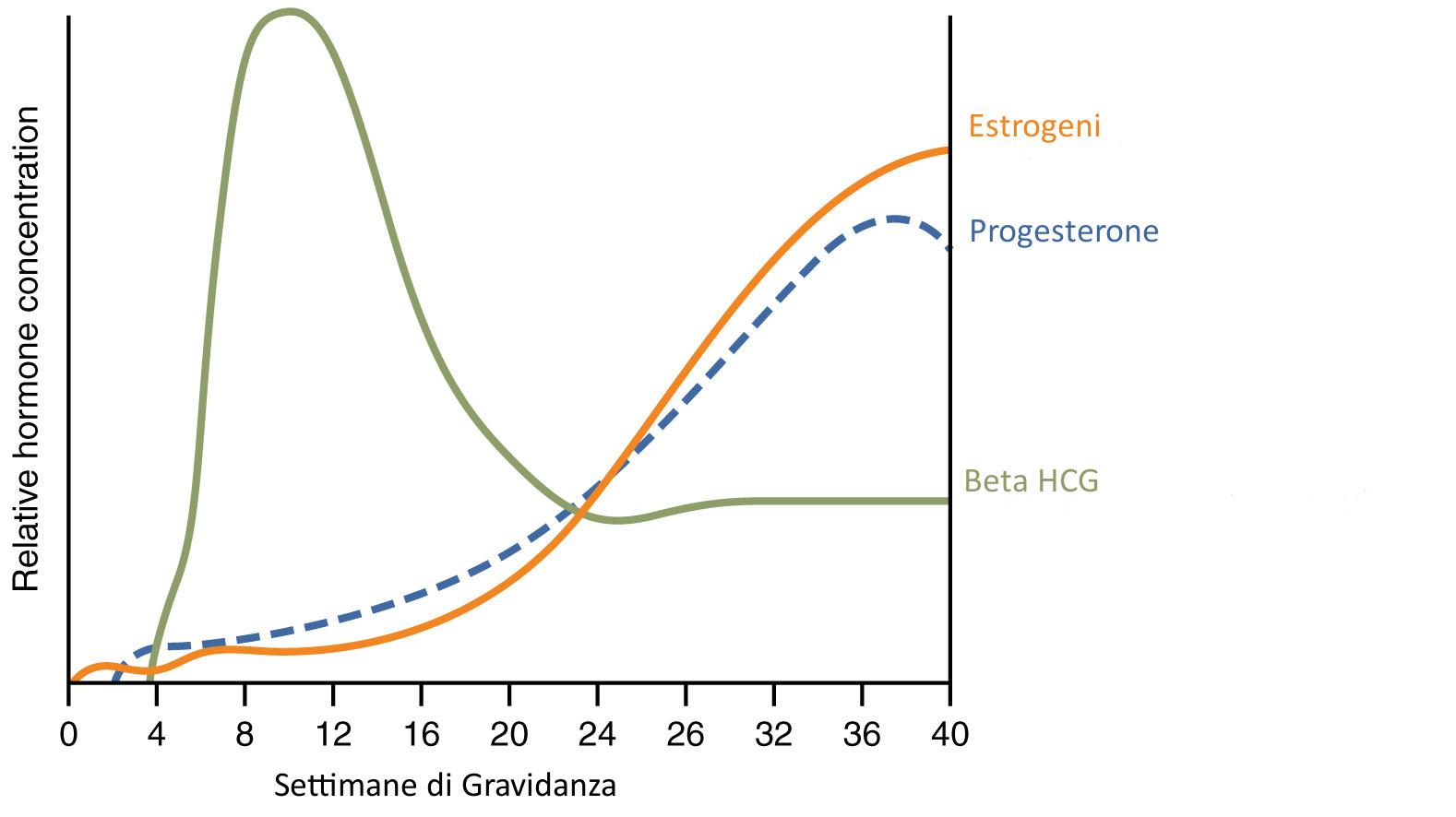 grafico ormoni principali gravidanza
