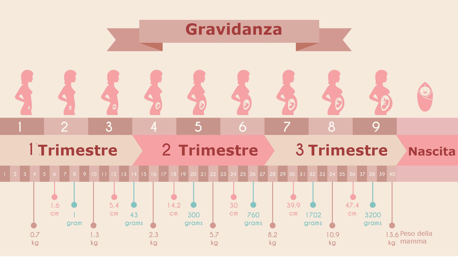 Tredicesima settimana di gravidanza (settimana 13 ...