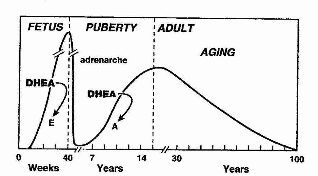 DHEA per età