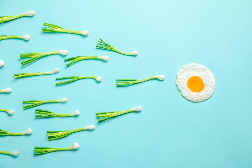 donazione di ovociti e spermatozoi